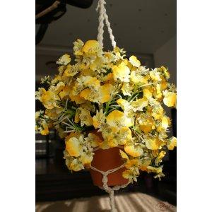 Cascada aurie a orhideelor