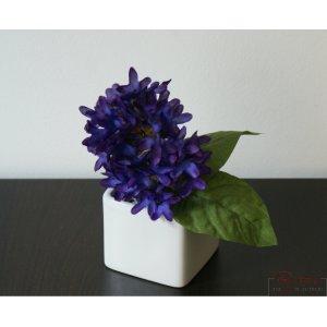 Violet magnific